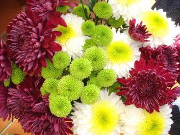 Chrysanthemum flower facts and meaning november birth flower mum chrysanthemums mightylinksfo